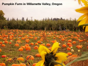 oregon pumpkin farm picture