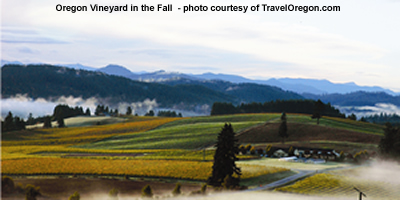 oregon vineyard in fall picture